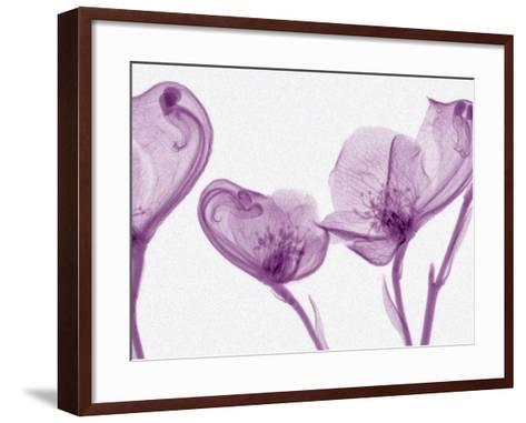 X-Ray of Pockets Flowers-George Taylor-Framed Art Print