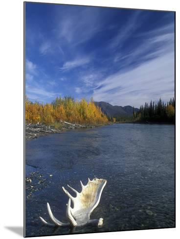 Moose Antler in the Hunts River, Brooks Range, Kobuk National Park, Alaska, USA-Tom Walker-Mounted Photographic Print