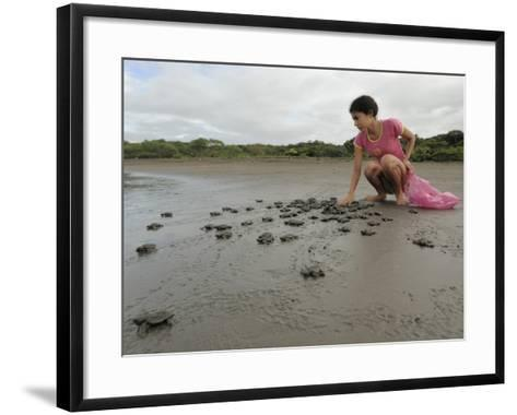 An Olive Ridley Sea Turtle Hatchling (Lepidochelys Olivacea) on its Way to the Distant Sea-Solvin Zankl-Framed Art Print