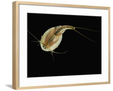 Summer Tadpole Shrimp (Triops Longicaudatus)-Solvin Zankl-Framed Art Print
