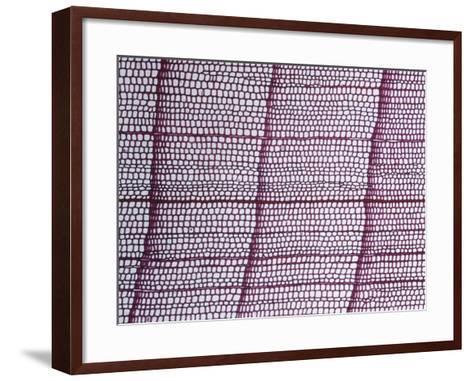 Cross-Section of an Alaska Cedar Stem (Chamaecyparis Nootkatensis), LM X17-Biodisc-Framed Art Print