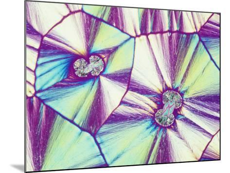 Vitamin C or Ascorbic Acid Crystals, Polarized, LM X16-Gladden Willis-Mounted Photographic Print