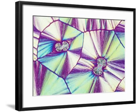 Vitamin C or Ascorbic Acid Crystals, Polarized, LM X16-Gladden Willis-Framed Art Print