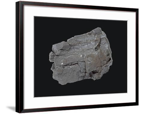 Lignite Coal Specimen-Scientifica-Framed Art Print