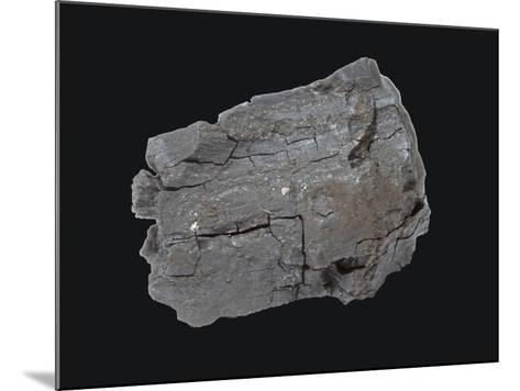 Lignite Coal Specimen-Scientifica-Mounted Photographic Print