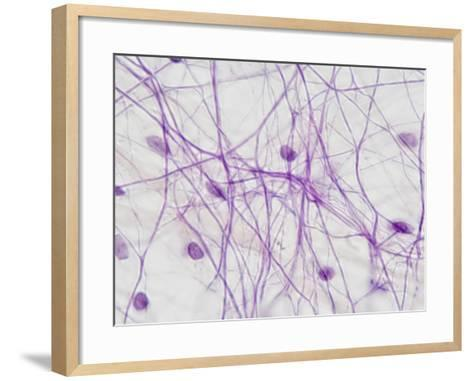 Areolar Connective Tissue, LM X250-Scientifica-Framed Art Print