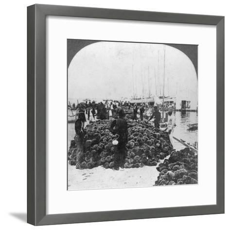 Sponge Market, Key West Harbour, Florida, USA, C1900--Framed Art Print