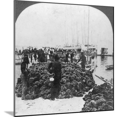 Sponge Market, Key West Harbour, Florida, USA, C1900--Mounted Photographic Print