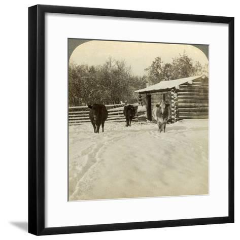 Winter on a Ranch, Montana, Usa-Underwood & Underwood-Framed Art Print