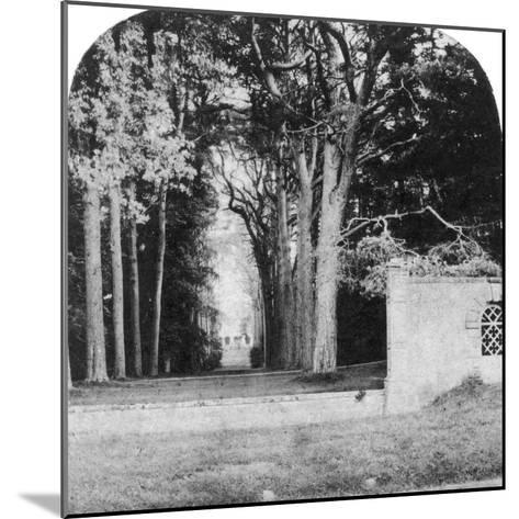 The Avenue, Guy's Cliff, Warwick, Early 20th Century--Mounted Photographic Print