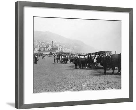 Bullock Carriages, Madeira, Portugal, C1920s-C1930s--Framed Art Print