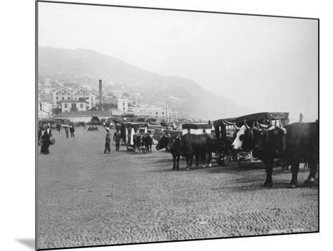 Bullock Carriages, Madeira, Portugal, C1920s-C1930s--Mounted Photographic Print