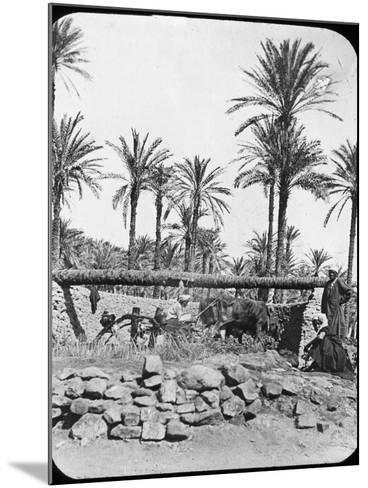 Water Wheel, Egypt, C1890-Newton & Co-Mounted Photographic Print