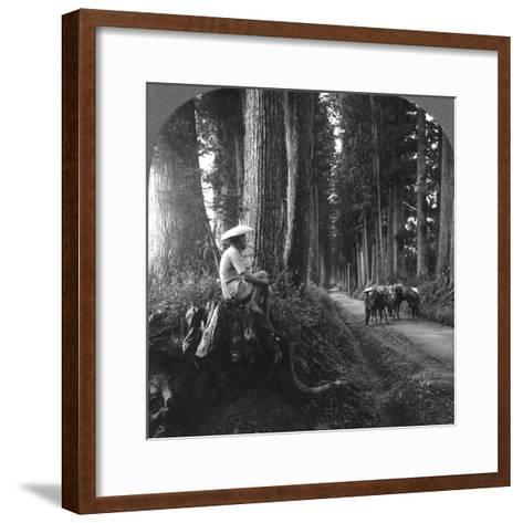 The Sacred Road to Nikko, Japan, 1905-BL Singley-Framed Art Print