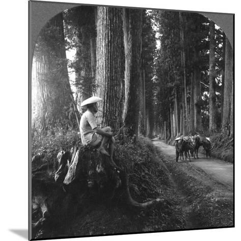 The Sacred Road to Nikko, Japan, 1905-BL Singley-Mounted Photographic Print