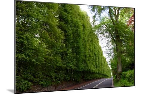 Meikleour Beech Hedge, Perthshire, Scotland-Peter Thompson-Mounted Photographic Print