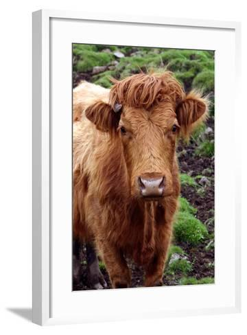 Cattle, Skye, Highland, Scotland-Peter Thompson-Framed Art Print