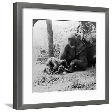 Mahout Removing a Thorn from an Elephant's Foot, Behar Tiger Shoot, India, C1900s-Underwood & Underwood-Framed Art Print