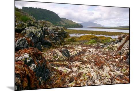 Seaweed Near Eilean Donan Castle, Highland, Scotland-Peter Thompson-Mounted Photographic Print