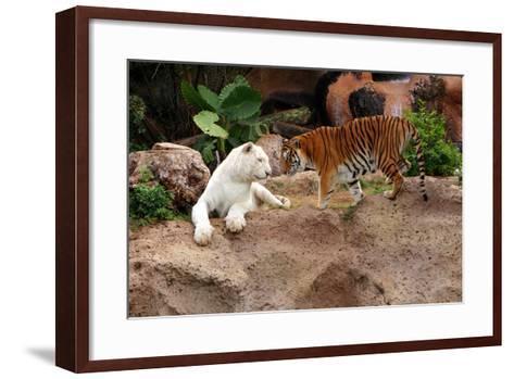 Tigers, Loro Parque, Tenerife, Canary Islands, 2007-Peter Thompson-Framed Art Print