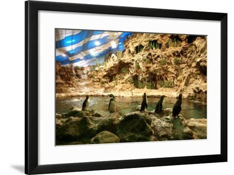 Penguins, Loro Parque, Tenerife, Canary Islands, 2007-Peter Thompson-Framed Art Print