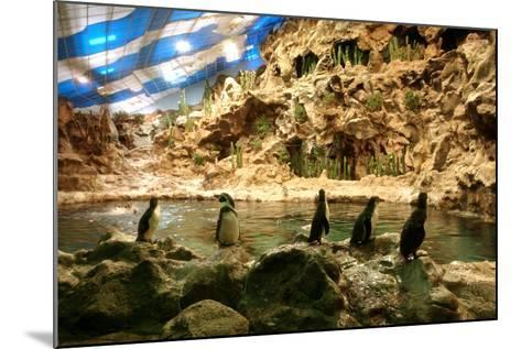 Penguins, Loro Parque, Tenerife, Canary Islands, 2007-Peter Thompson-Mounted Photographic Print