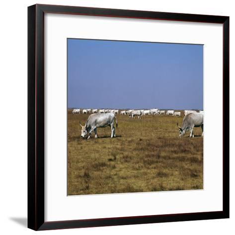 Hungarian White Cattle-CM Dixon-Framed Art Print