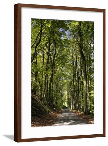 Tree-Lined Road, Castleton, Derbyshire-Peter Thompson-Framed Art Print