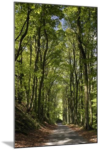 Tree-Lined Road, Castleton, Derbyshire-Peter Thompson-Mounted Photographic Print