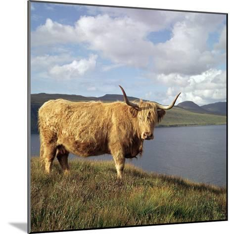 Highland Cows on the Isle of Skye-CM Dixon-Mounted Photographic Print