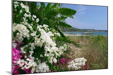 Flowering Shrubs and Palms, Katelios, Kefalonia, Greece-Peter Thompson-Mounted Photographic Print