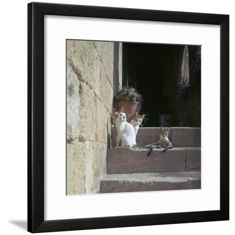 Kittens in Rhodes Old Town-CM Dixon-Framed Art Print