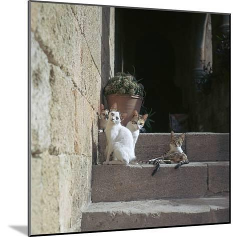 Kittens in Rhodes Old Town-CM Dixon-Mounted Photographic Print