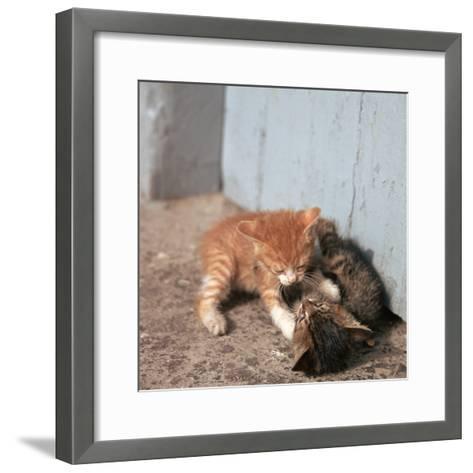 Kittens in Heracleion, Crete-CM Dixon-Framed Art Print