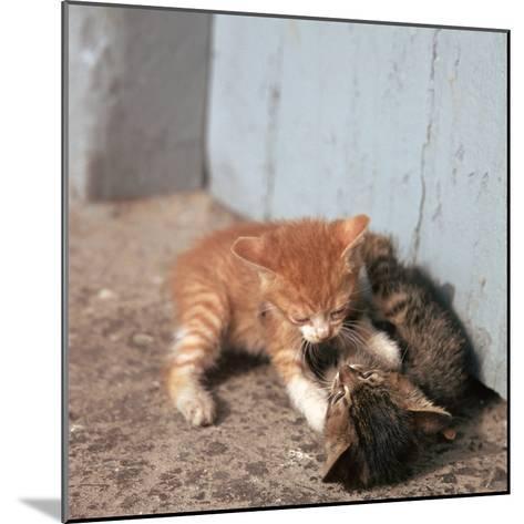 Kittens in Heracleion, Crete-CM Dixon-Mounted Photographic Print