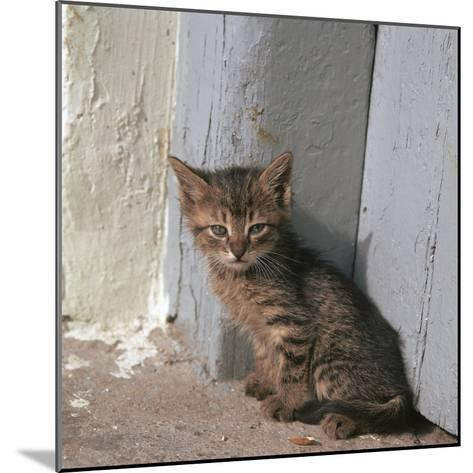 Kitten in Heracleion-CM Dixon-Mounted Photographic Print