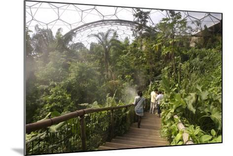 Inside the Humid Tropics Biome, Eden Project, Near St Austell, Cornwall-Peter Thompson-Mounted Photographic Print