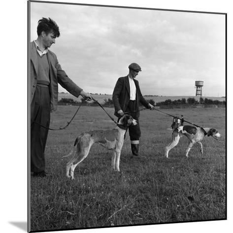 Hound Trailing, One of Cumbrias Oldest and Most Popular Sports, Keswick, 2nd July 1962-Michael Walters-Mounted Photographic Print