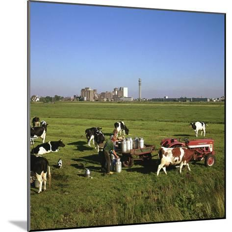 Cattle-Milking in Fields North-West of Amsterdam-CM Dixon-Mounted Photographic Print
