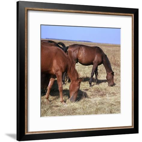 Herd of Horses Grazing on the Hortobagy Plaza-CM Dixon-Framed Art Print