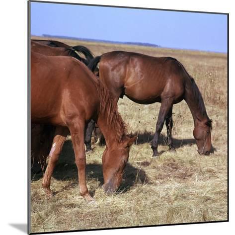Herd of Horses Grazing on the Hortobagy Plaza-CM Dixon-Mounted Photographic Print