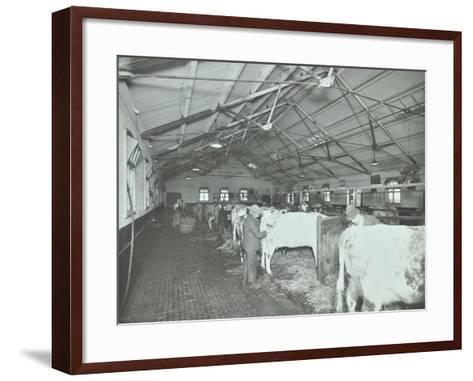 Grooming Cattle in a Cowshed, Claybury Hospital, Woodford Bridge, London, 1937--Framed Art Print