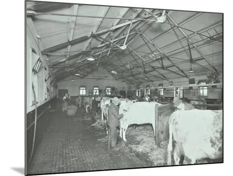 Grooming Cattle in a Cowshed, Claybury Hospital, Woodford Bridge, London, 1937--Mounted Photographic Print