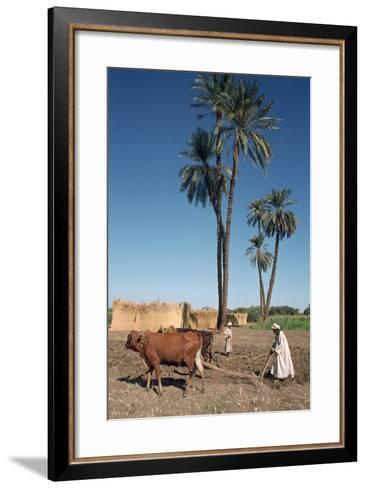 Farmer with an Ox-Drawn Plough, Dendera, Egypt-Vivienne Sharp-Framed Art Print