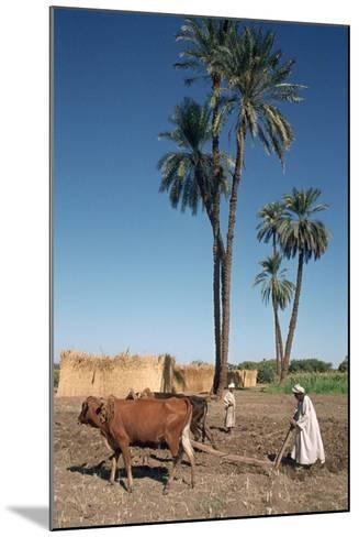 Farmer with an Ox-Drawn Plough, Dendera, Egypt-Vivienne Sharp-Mounted Photographic Print