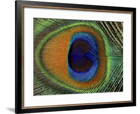 Close-Up of the Eye of a Peacock Feather, (Pavo Cristatus)-Ashok Jain-Framed Art Print