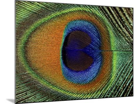 Close-Up of the Eye of a Peacock Feather, (Pavo Cristatus)-Ashok Jain-Mounted Photographic Print