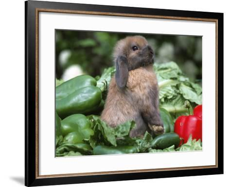 Holland Lop Domestic Rabbit-Lynn M^ Stone-Framed Art Print