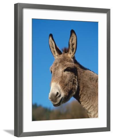 Domestic Donkey Head Portrait, Europe-Reinhard-Framed Art Print