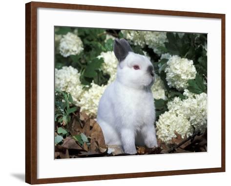 Netherland Dwarf Domestic Rabbit-Lynn M^ Stone-Framed Art Print